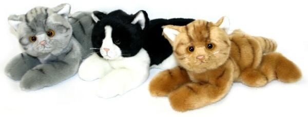 divoké Teen mačička