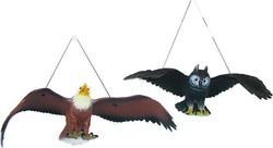 dobre vyzerajúci chlapci s veľkými vtáky